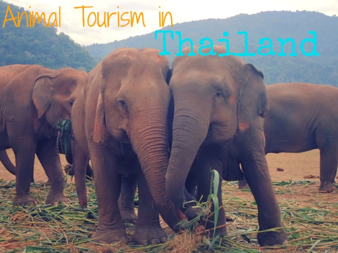 Animal Tourism in Thailand