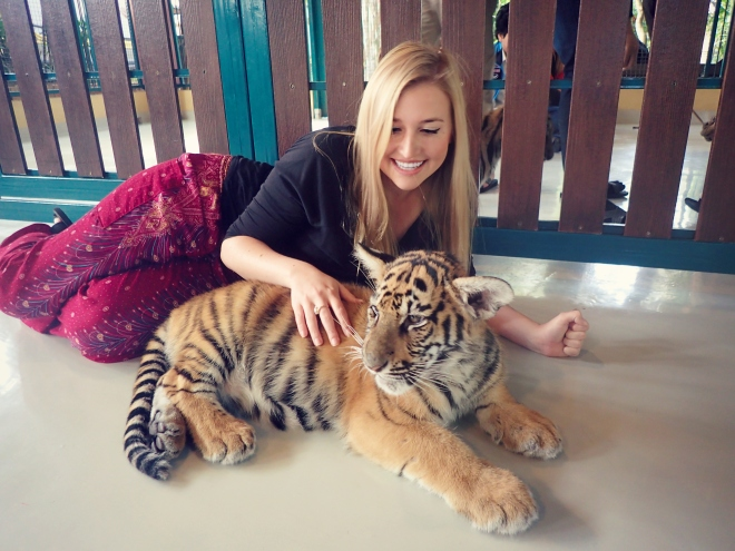 Playing with tigers in Thailand