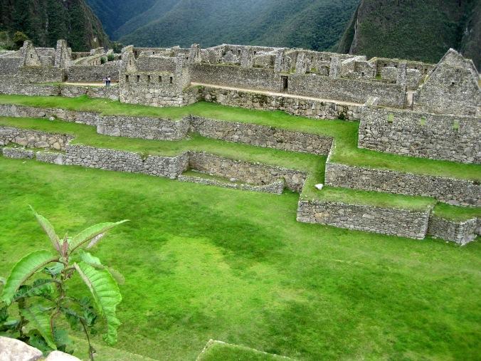 Machu Picchu Grass