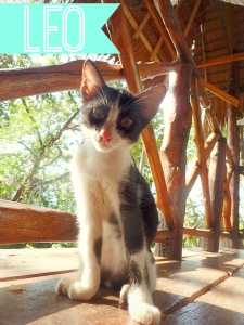 The story of Leo, the island cat of Koh Phi Phi